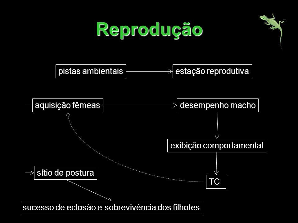 Reprodução pistas ambientaisestação reprodutiva aquisição fêmeasdesempenho macho TC exibição comportamental sítio de postura sucesso de eclosão e sobr