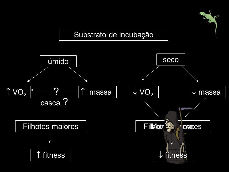 Substrato de incubação úmido seco VO 2 massa ? casca ? massa Filhotes maiores fitness Filhotes menoresMorte do ovo fitness