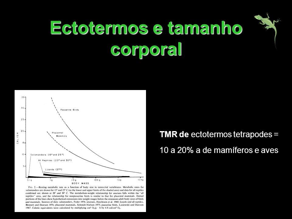 Ectotermos e tamanho corporal TMR de ectotermos tetrapodes = 10 a 20% a de mamíferos e aves