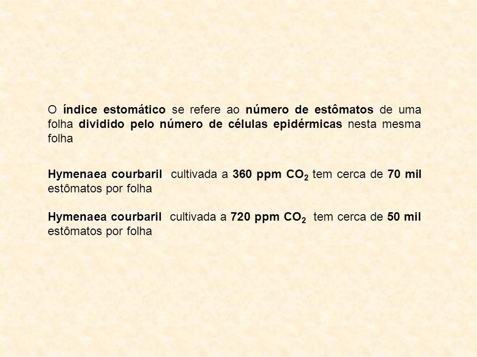 O índice estomático se refere ao número de estômatos de uma folha dividido pelo número de células epidérmicas nesta mesma folha Hymenaea courbaril Hym