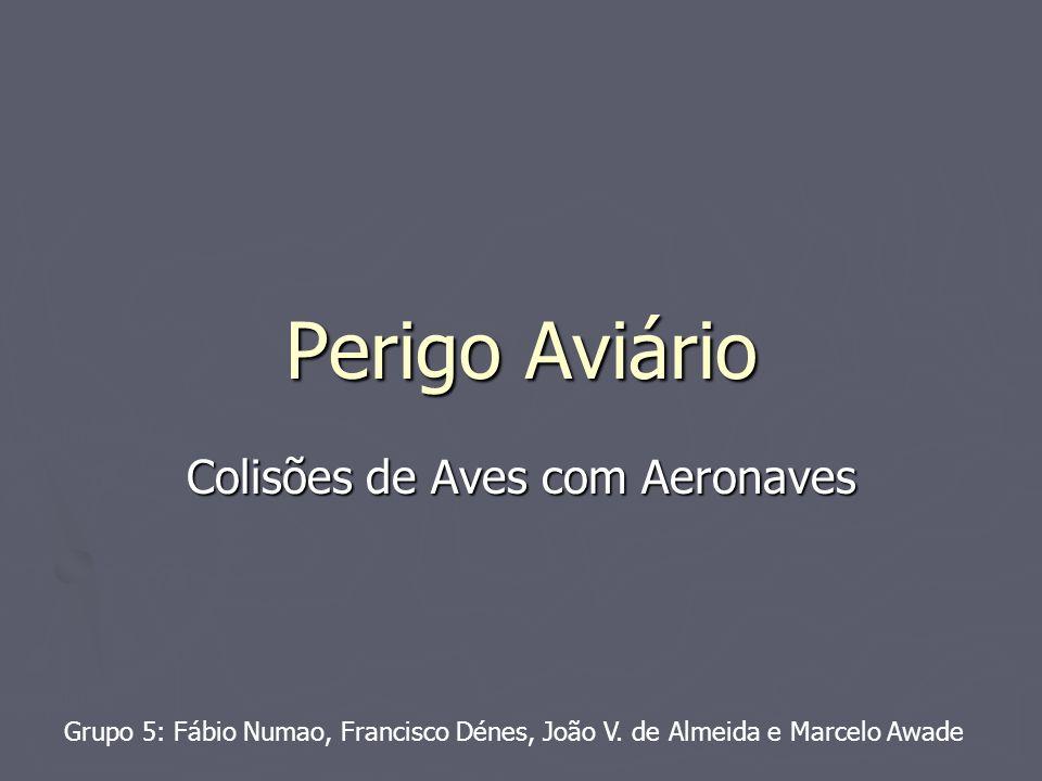 Perigo Aviário Colisões de Aves com Aeronaves Grupo 5: Fábio Numao, Francisco Dénes, João V. de Almeida e Marcelo Awade