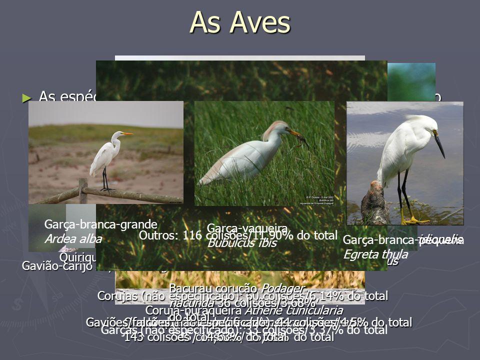 As Aves As espécies de aves que mais colidem com aeronaves no Brasil são (dados de 1980-2000): As espécies de aves que mais colidem com aeronaves no B