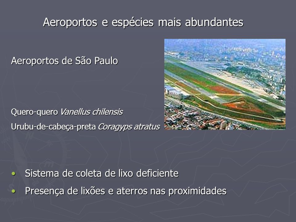 Aeroportos e espécies mais abundantes Aeroportos de São Paulo Quero-quero Vanellus chilensis Urubu-de-cabeça-preta Coragyps atratus Sistema de coleta