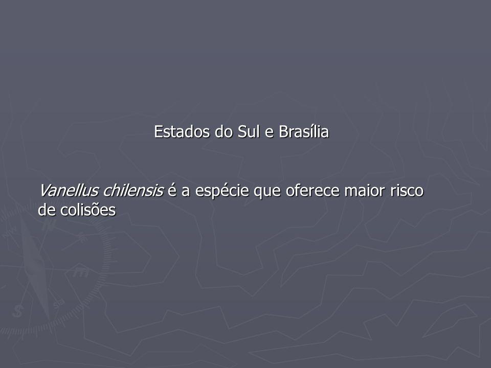 Estados do Sul e Brasília Vanellus chilensis é a espécie que oferece maior risco de colisões