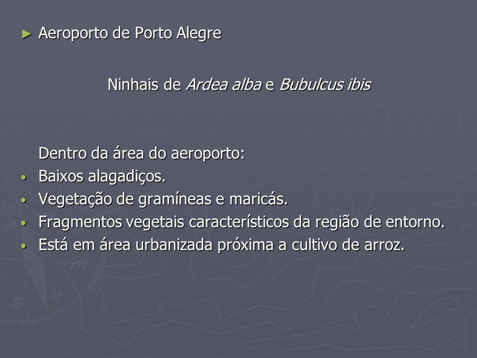 Aeroporto de Porto Alegre Aeroporto de Porto Alegre Ninhais de Ardea alba e Bubulcus ibis Dentro da área do aeroporto: Baixos alagadiços. Baixos alaga