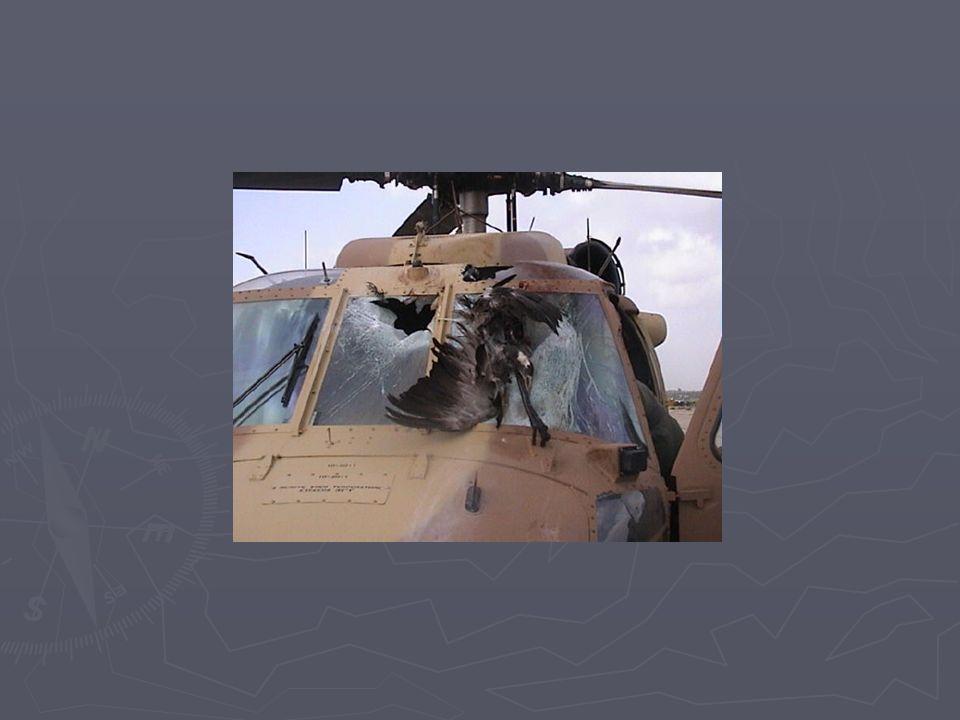 Tendo em vista a legislação, as medidas mitigatórias devem procurar afastar as espécies das proximidades dos aeroportos, sem dano considerável ou abate das aves Principais medidas: Respeito à Área de Segurança Aeroportuária (Resolução MMA/1995): proibição da instalação de matadouros, depósitos de lixo, indústrias pesqueiras e algumas culturas de plantação – raio de 20km Respeito à Área de Segurança Aeroportuária (Resolução MMA/1995): proibição da instalação de matadouros, depósitos de lixo, indústrias pesqueiras e algumas culturas de plantação – raio de 20km Manejo da vegetação no entorno, minimizando a possibilidade de atração, alimentação e nidificação – estudos e medidas espécie- específicos Manejo da vegetação no entorno, minimizando a possibilidade de atração, alimentação e nidificação – estudos e medidas espécie- específicos Outras medidas: Estudos sobre espécies migratórias Estudos sobre espécies migratórias Vigilância do espaço aéreo Vigilância do espaço aéreo Construção de novos aeroportos – seleção de áreas adequadas Construção de novos aeroportos – seleção de áreas adequadas Conscientização da comunidade aeronáutica sobre a importância de se reportar os acidentes ao CENIPA (órgão central de segurança de vôo no país) Conscientização da comunidade aeronáutica sobre a importância de se reportar os acidentes ao CENIPA (órgão central de segurança de vôo no país) Instrução aos pilotos – ações evasivas adequadas Instrução aos pilotos – ações evasivas adequadas Legislação e Medidas Mitigatórias