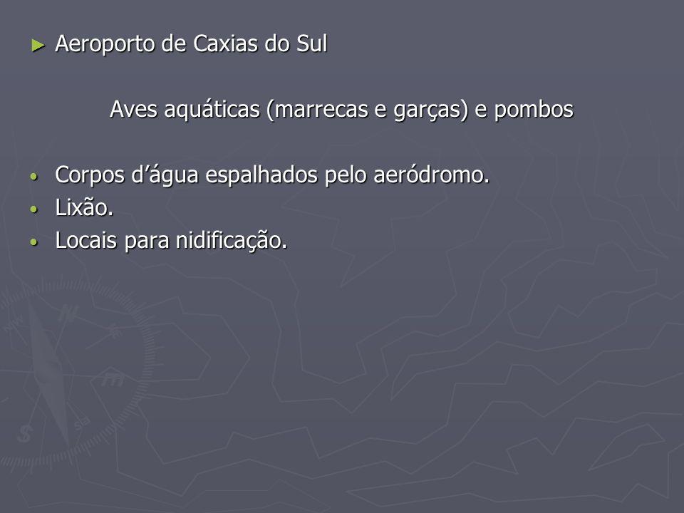 Aeroporto de Caxias do Sul Aeroporto de Caxias do Sul Aves aquáticas (marrecas e garças) e pombos Corpos dágua espalhados pelo aeródromo. Corpos dágua