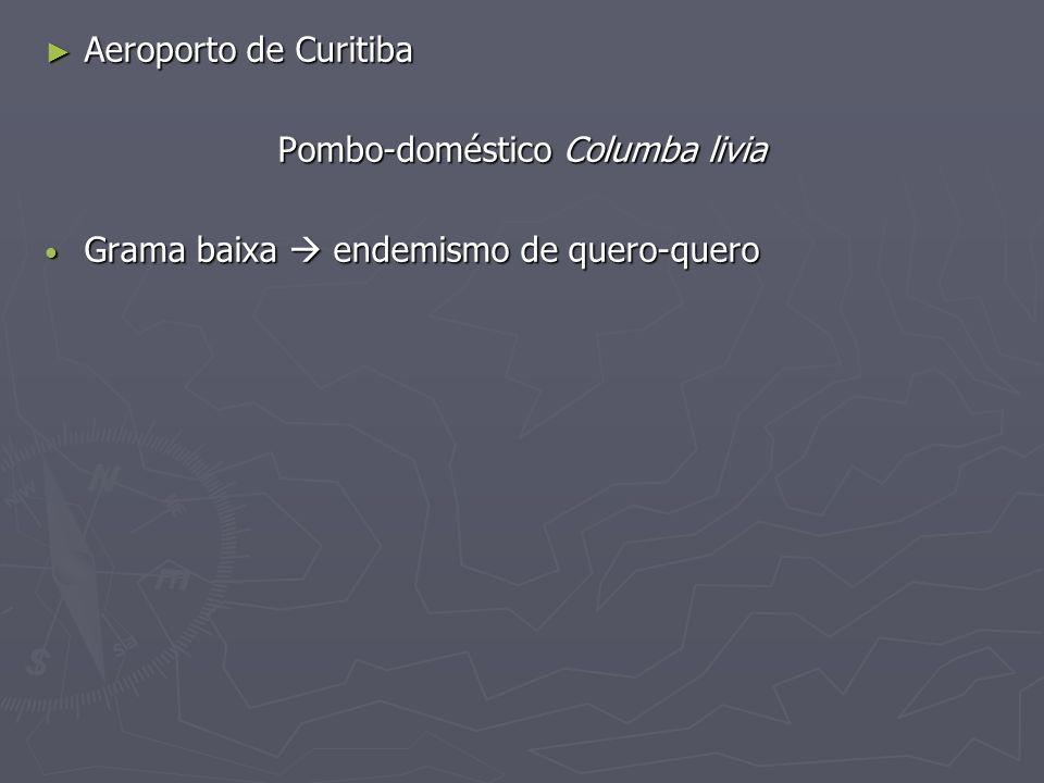 Aeroporto de Curitiba Aeroporto de Curitiba Pombo-doméstico Columba livia Grama baixa endemismo de quero-quero Grama baixa endemismo de quero-quero