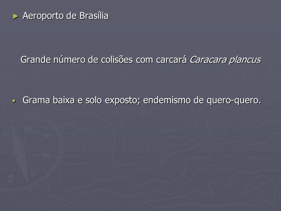 Aeroporto de Brasília Aeroporto de Brasília Grande número de colisões com carcará Caracara plancus Grama baixa e solo exposto; endemismo de quero-quer