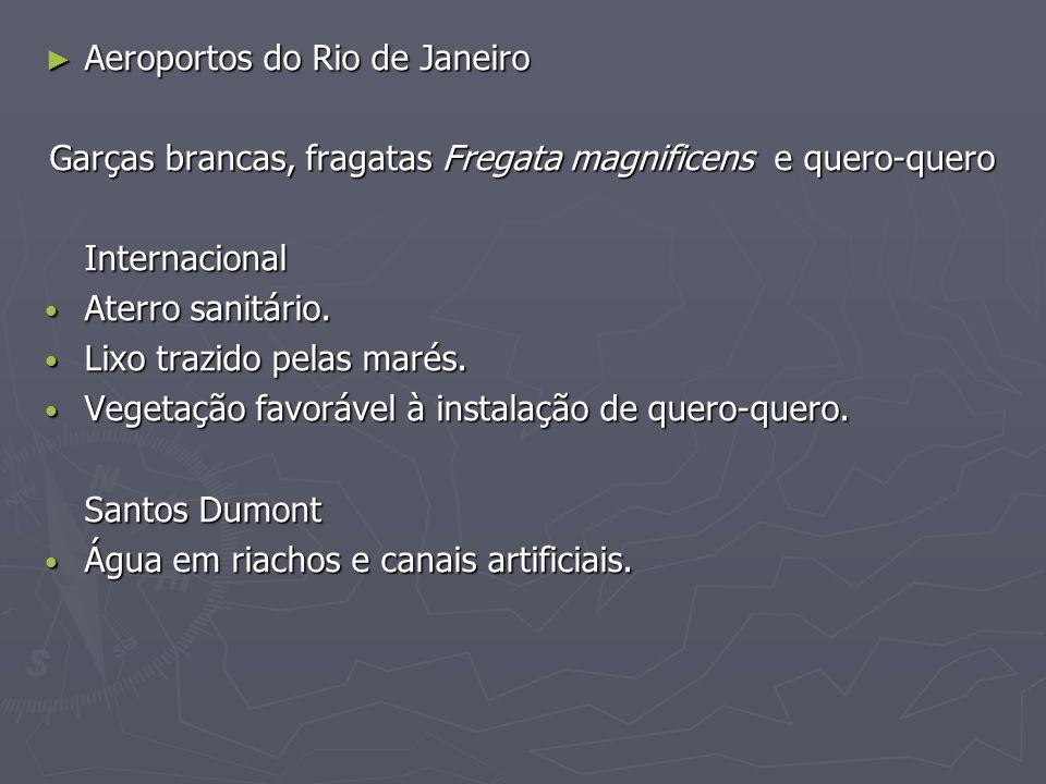 Aeroportos do Rio de Janeiro Aeroportos do Rio de Janeiro Garças brancas, fragatas Fregata magnificens e quero-quero Internacional Aterro sanitário. A