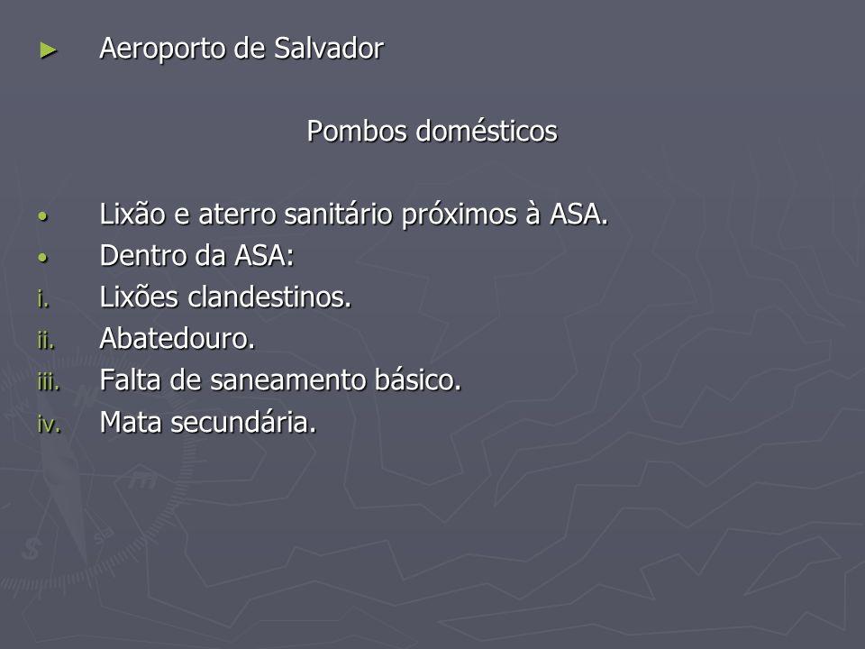 Aeroporto de Salvador Aeroporto de Salvador Pombos domésticos Lixão e aterro sanitário próximos à ASA. Lixão e aterro sanitário próximos à ASA. Dentro