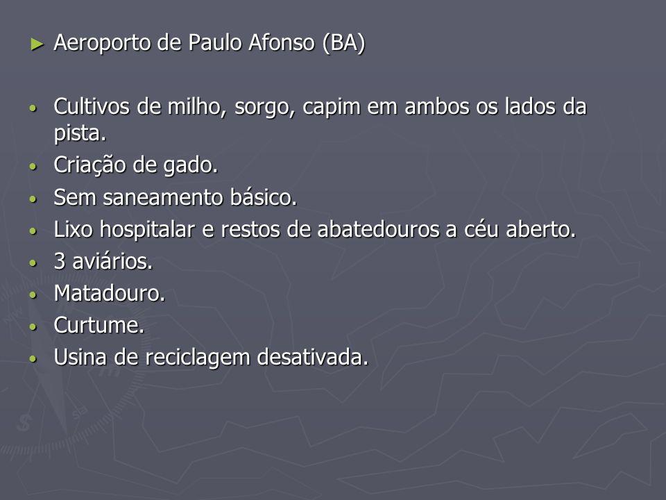 Aeroporto de Paulo Afonso (BA) Aeroporto de Paulo Afonso (BA) Cultivos de milho, sorgo, capim em ambos os lados da pista. Cultivos de milho, sorgo, ca