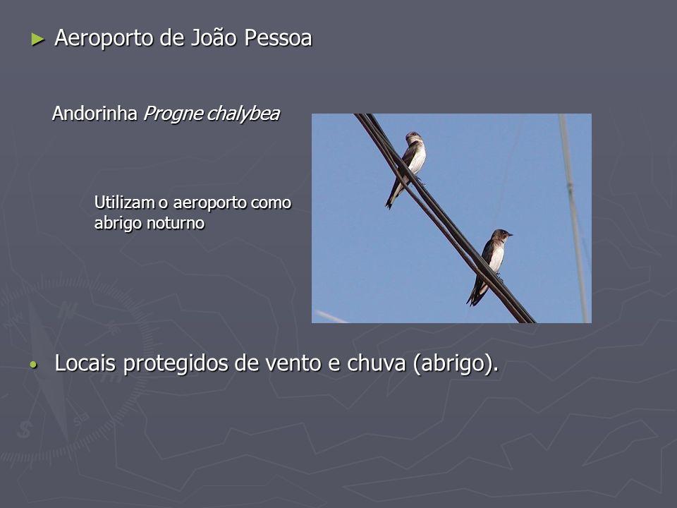 Aeroporto de João Pessoa Aeroporto de João Pessoa Locais protegidos de vento e chuva (abrigo). Locais protegidos de vento e chuva (abrigo). Andorinha
