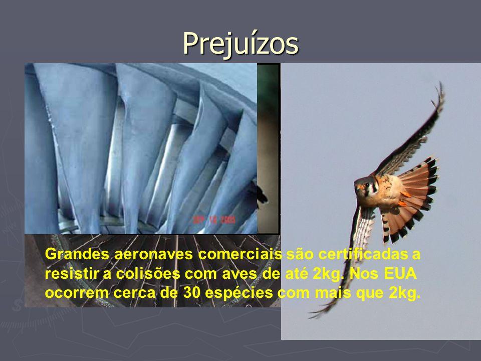 Prejuízos Turbina danificada por um Quiriquiri (Falco sparverius), menor falcão da América do Norte, pesando cerca de 120g. Caçam pequenas presas próx