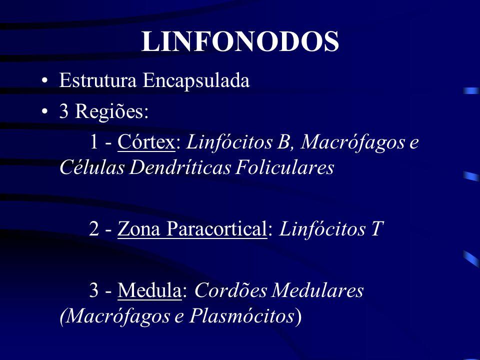 Estroma Tímico Células Epiteliais, Dendríticas e Macrófagos Efeitos da Timectomia Decréscimo nos linfócitos T circulantes e ausência da imunidade medi