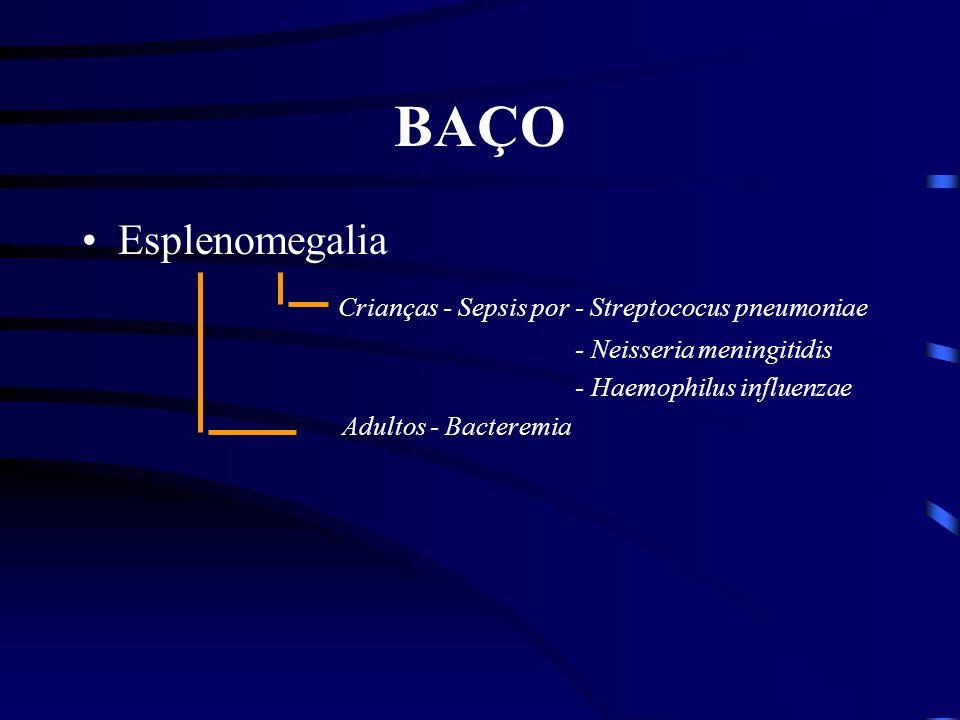 Antígenos e Linfócitos Baço Artéria Esplênica Zona Marginal Antígeno e cels Dendríticas Bainha