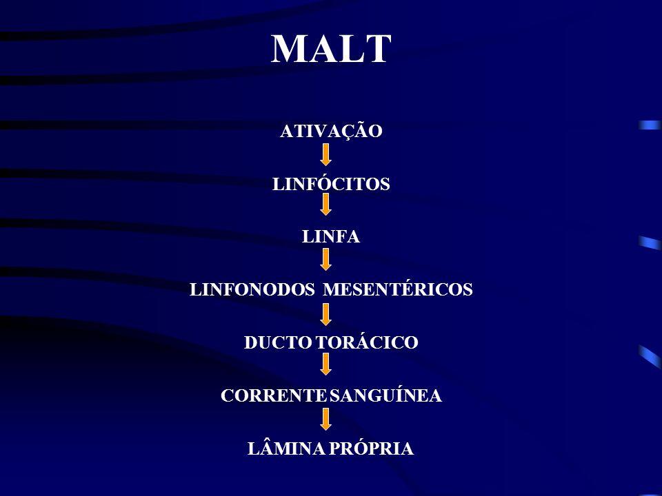 MALT Mucosas - Sistema digestivo respiratório e urogenital Área de superfície - 400 m 2 Sítio de entrada - Maioria dos Patógenos MALT - Tonsilas (amíg