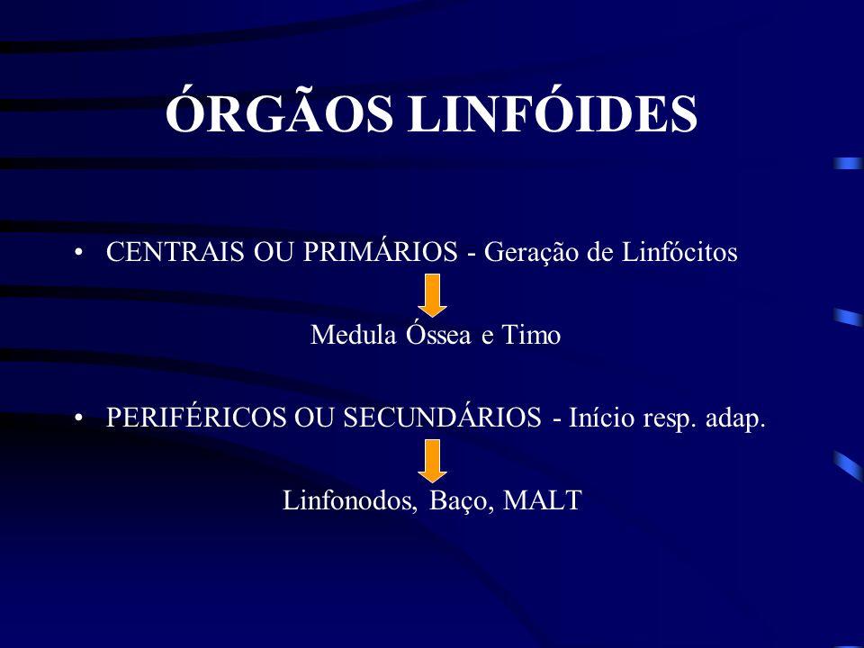 ÓRGÃOS LINFÓIDES CENTRAIS OU PRIMÁRIOS - Geração de Linfócitos Medula Óssea e Timo PERIFÉRICOS OU SECUNDÁRIOS - Início resp.