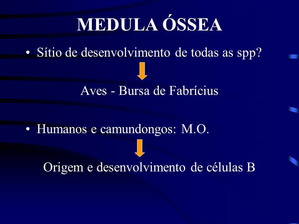 MEDULA ÓSSEA Sítio de desenvolvimento de todas as spp.