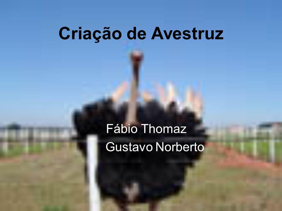 Criação de Avestruz Fábio Thomaz Gustavo Norberto