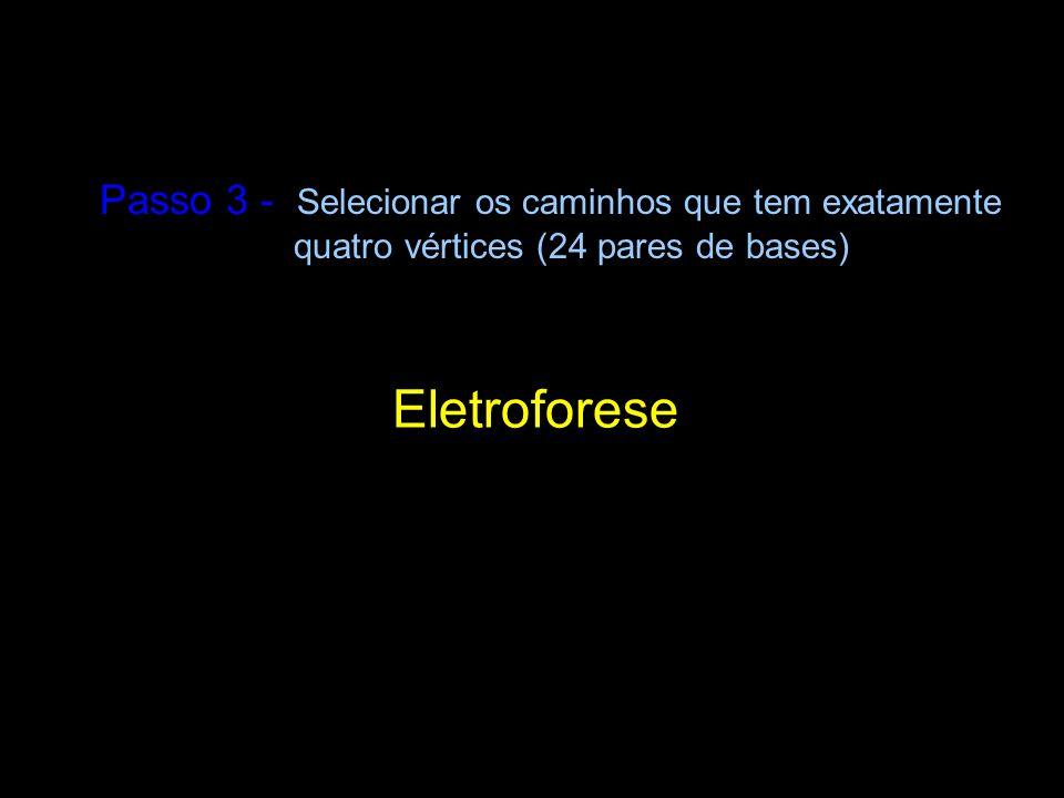Passo 3 - Selecionar os caminhos que tem exatamente quatro vértices (24 pares de bases) Eletroforese