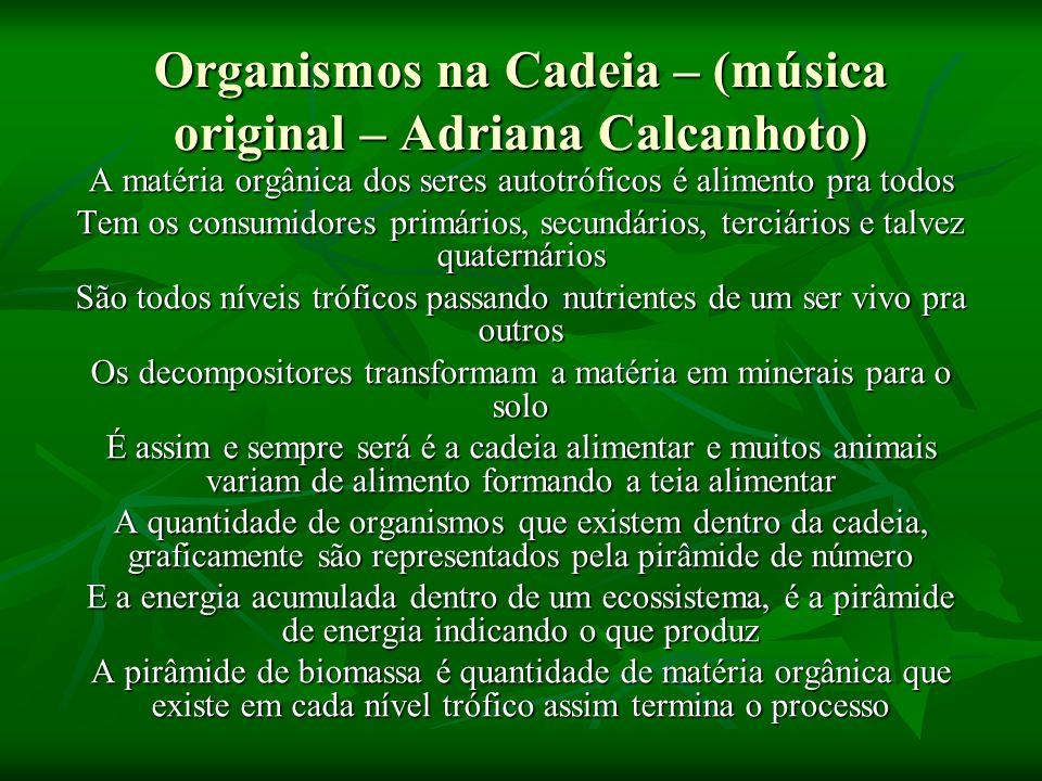 Organismos na Cadeia – (música original – Adriana Calcanhoto) A matéria orgânica dos seres autotróficos é alimento pra todos Tem os consumidores primá