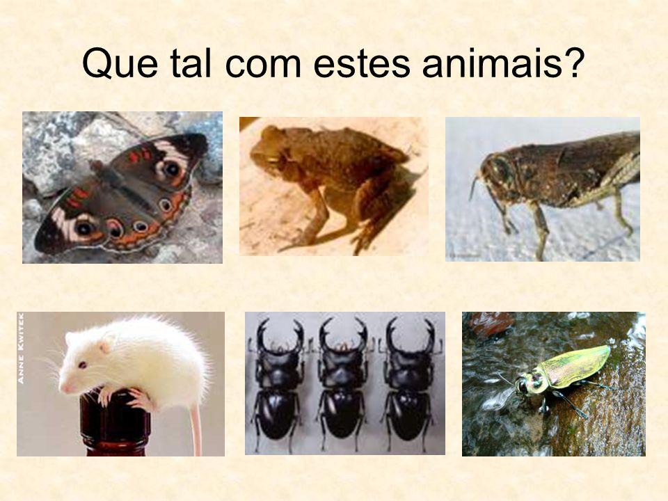 Que tal com estes animais?