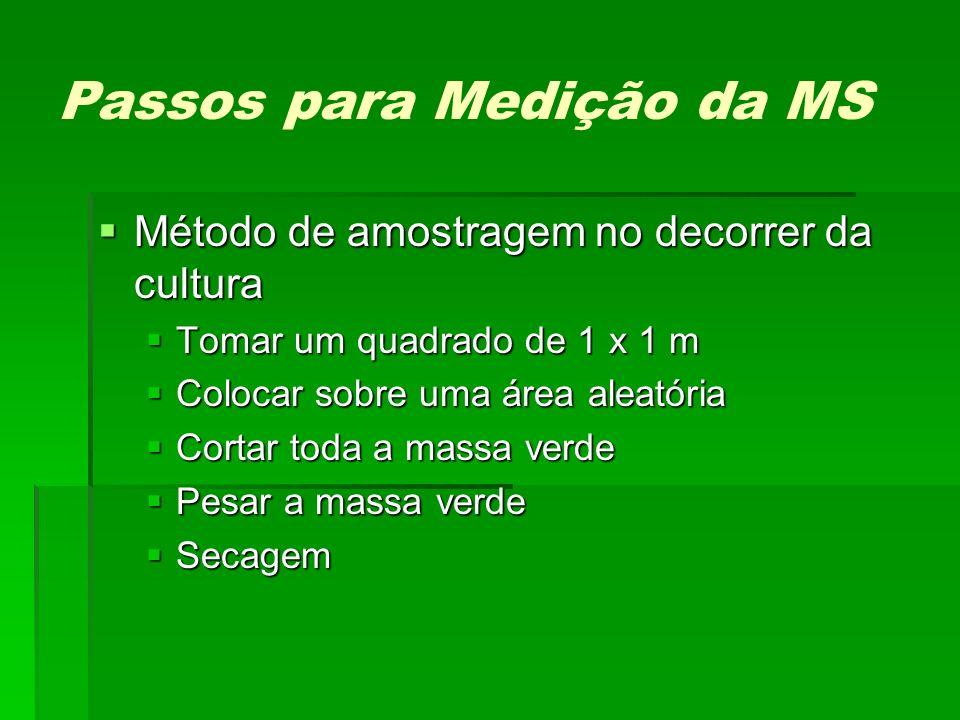 Passos para Medição da MS Método de amostragem no decorrer da cultura Método de amostragem no decorrer da cultura Tomar um quadrado de 1 x 1 m Tomar u