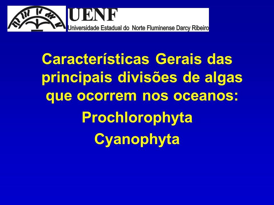 Características Gerais das principais divisões de algas que ocorrem nos oceanos: Prochlorophyta Cyanophyta