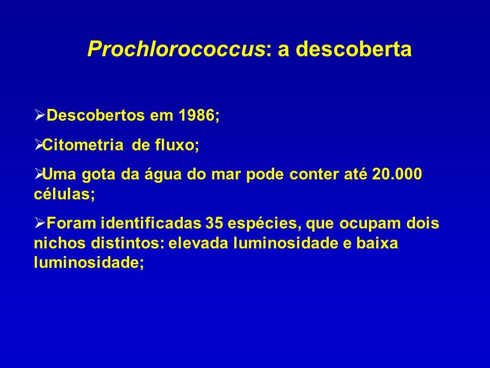 Prochlorococcus: a descoberta Descobertos em 1986; Citometria de fluxo; Uma gota da água do mar pode conter até 20.000 células; Foram identificadas 35