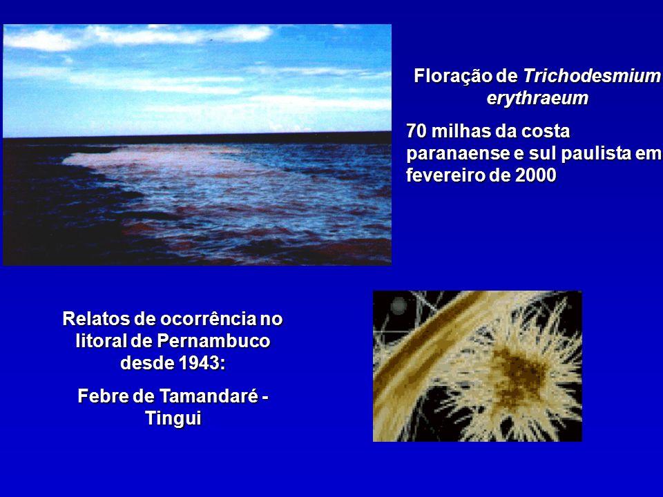Floração de Trichodesmium erythraeum 70 milhas da costa paranaense e sul paulista em fevereiro de 2000 Relatos de ocorrência no litoral de Pernambuco