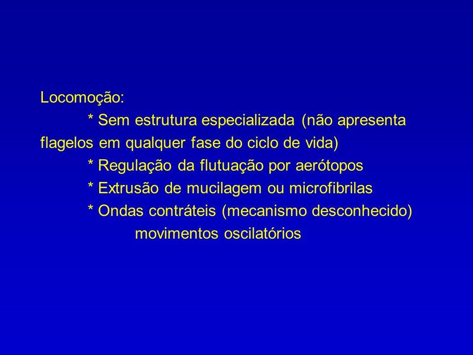 Locomoção: * Sem estrutura especializada (não apresenta flagelos em qualquer fase do ciclo de vida) * Regulação da flutuação por aerótopos * Extrusão