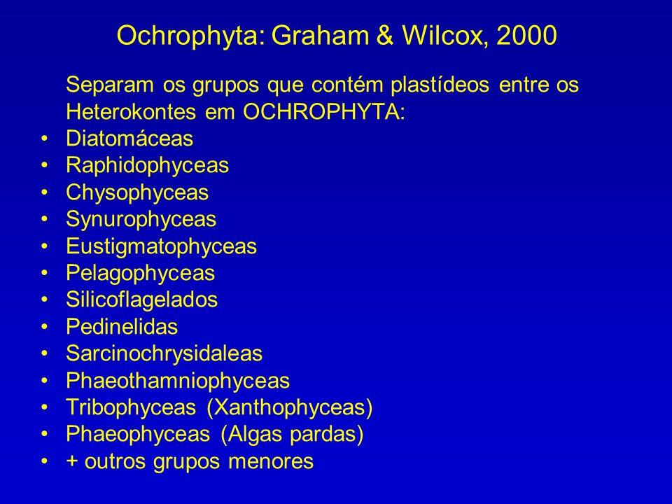 Separam os grupos que contém plastídeos entre os Heterokontes em OCHROPHYTA: Diatomáceas Raphidophyceas Chysophyceas Synurophyceas Eustigmatophyceas P