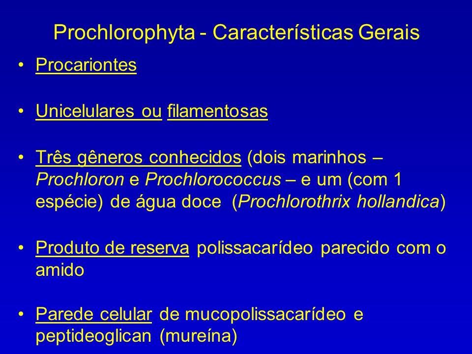 Prochlorophyta - Características Gerais Procariontes Unicelulares ou filamentosas Três gêneros conhecidos (dois marinhos – Prochloron e Prochlorococcus – e um (com 1 espécie) de água doce (Prochlorothrix hollandica) Produto de reserva polissacarídeo parecido com o amido Parede celular de mucopolissacarídeo e peptideoglican (mureína)