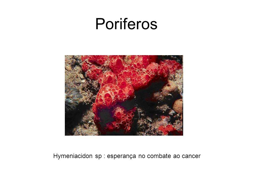 Poriferos Hymeniacidon sp : esperança no combate ao cancer