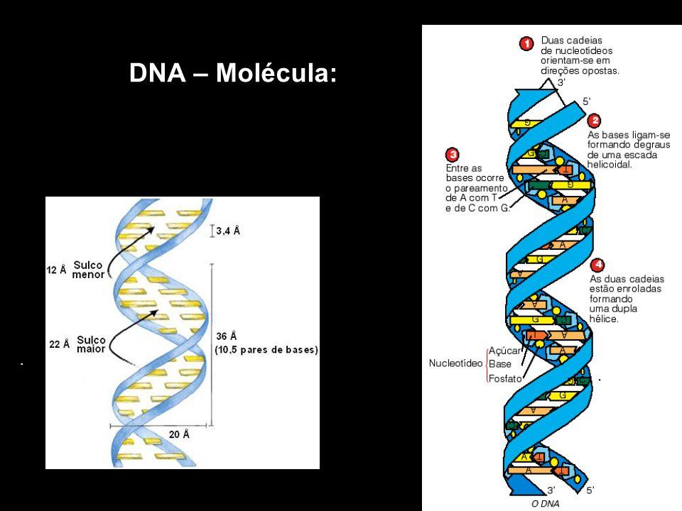 DNA – Molécula:.