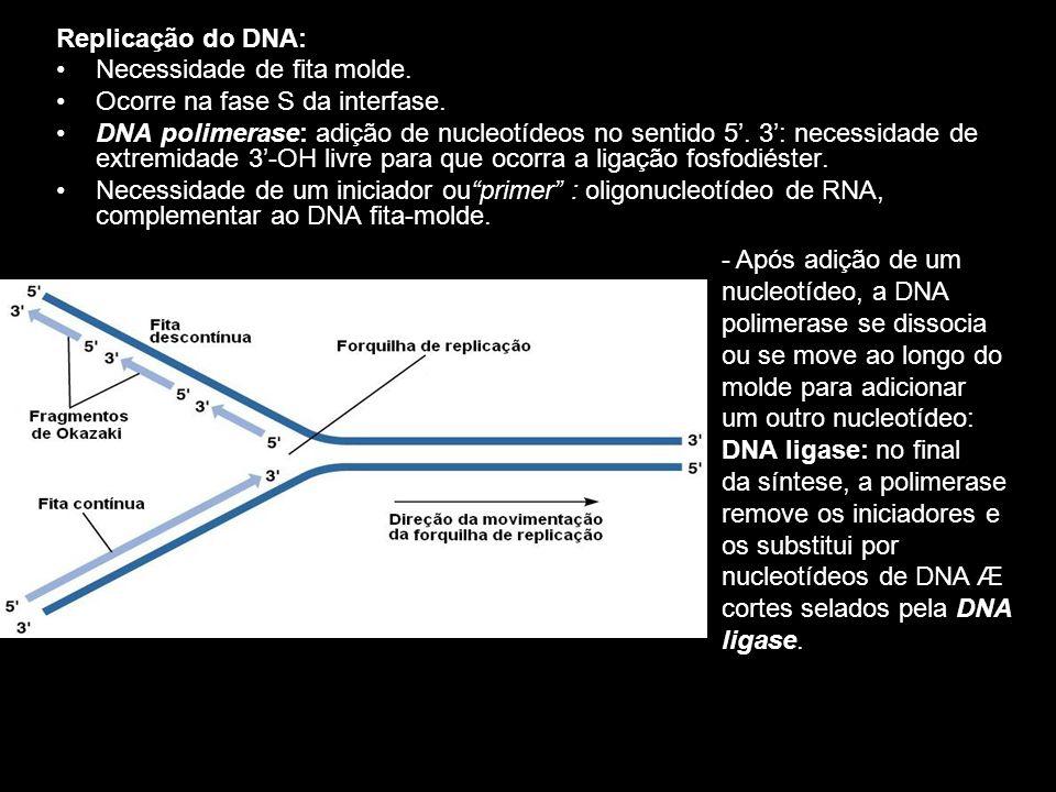 Replicação do DNA: Necessidade de fita molde. Ocorre na fase S da interfase. DNA polimerase: adição de nucleotídeos no sentido 5. 3: necessidade de ex