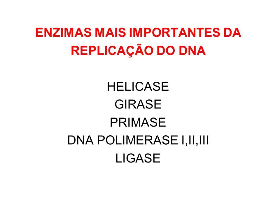 ENZIMAS MAIS IMPORTANTES DA REPLICAÇÃO DO DNA HELICASE GIRASE PRIMASE DNA POLIMERASE I,II,III LIGASE