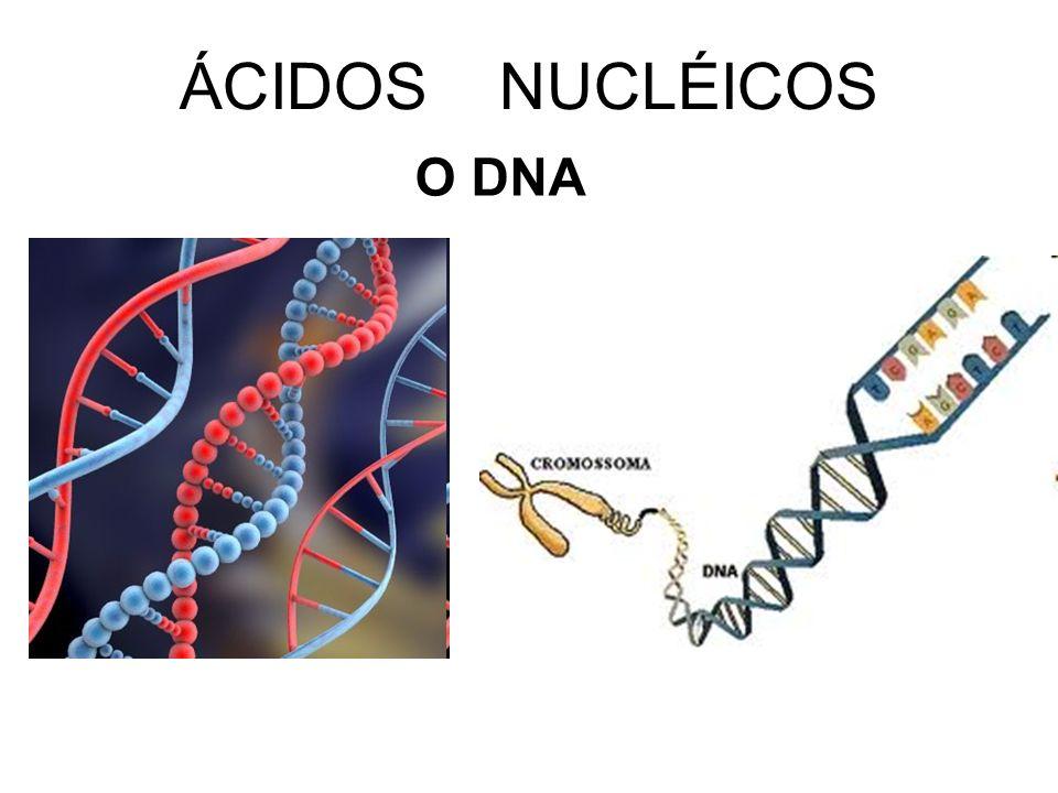 ÁCIDOS NUCLÉICOS O DNA