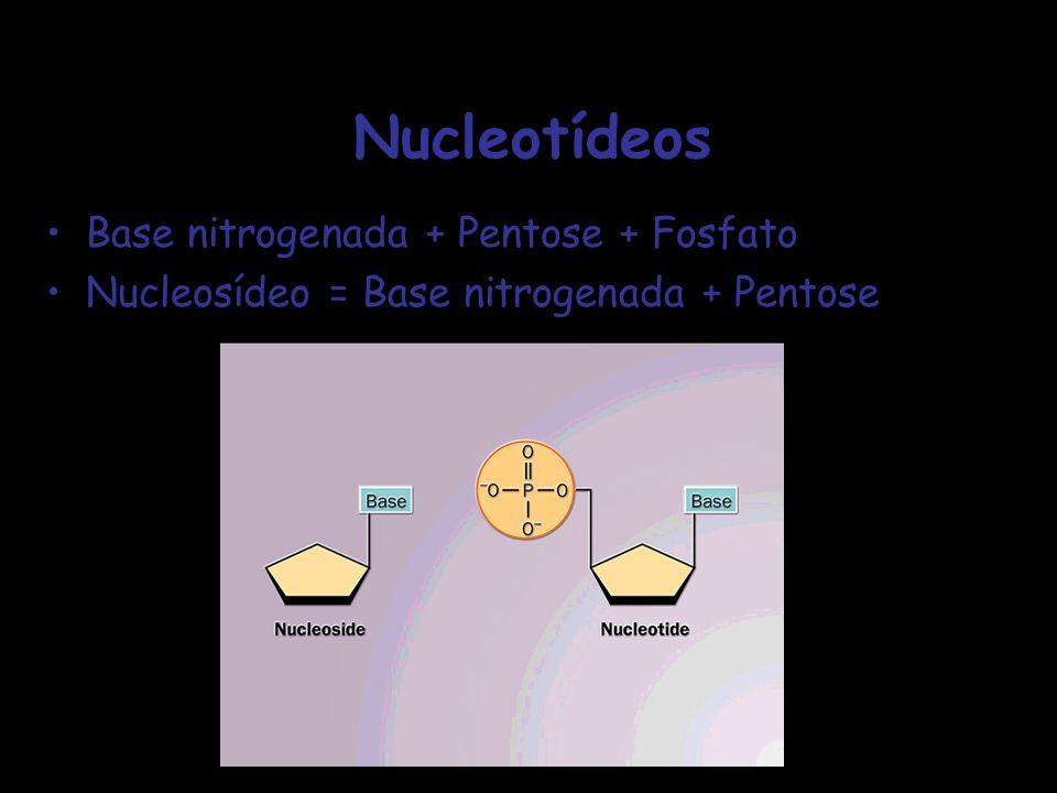 Nucleotídeos Base nitrogenada + Pentose + Fosfato Nucleosídeo = Base nitrogenada + Pentose