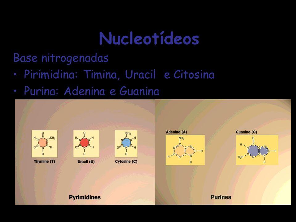 Nucleotídeos Base nitrogenadas Pirimidina: Timina, Uracil e Citosina Purina: Adenina e Guanina