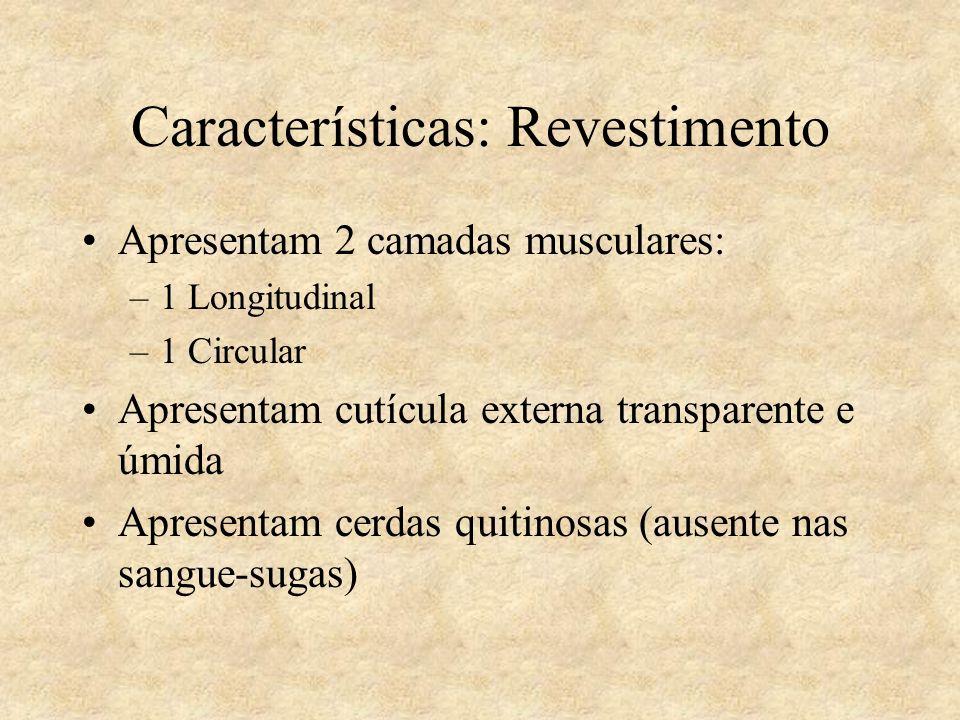 Características: Revestimento Apresentam 2 camadas musculares: –1 Longitudinal –1 Circular Apresentam cutícula externa transparente e úmida Apresentam