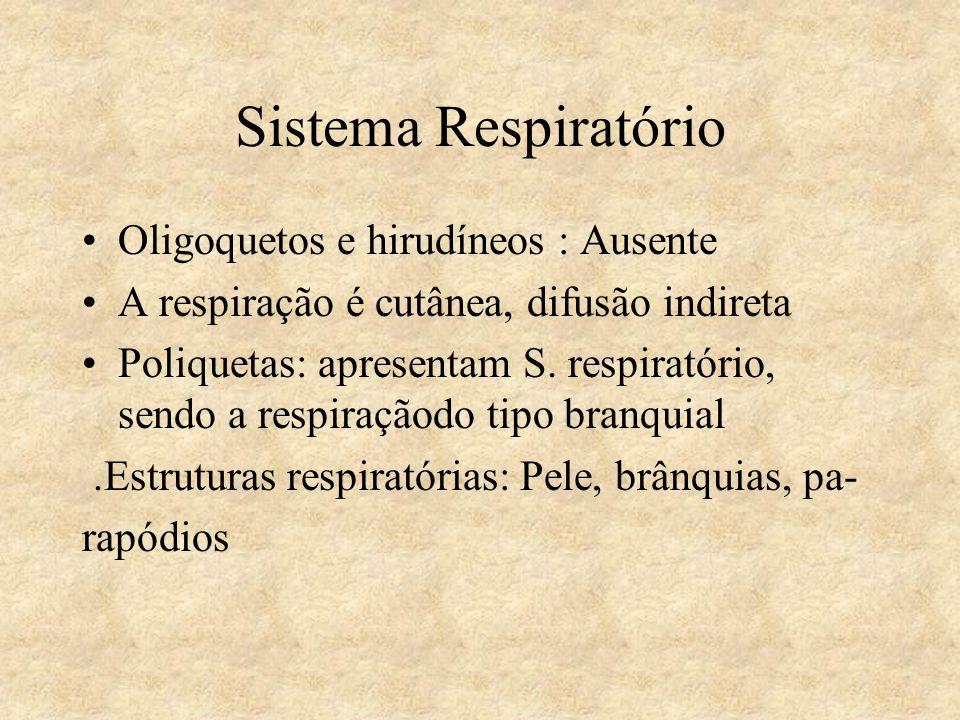 Sistema Respiratório Oligoquetos e hirudíneos : Ausente A respiração é cutânea, difusão indireta Poliquetas: apresentam S. respiratório, sendo a respi