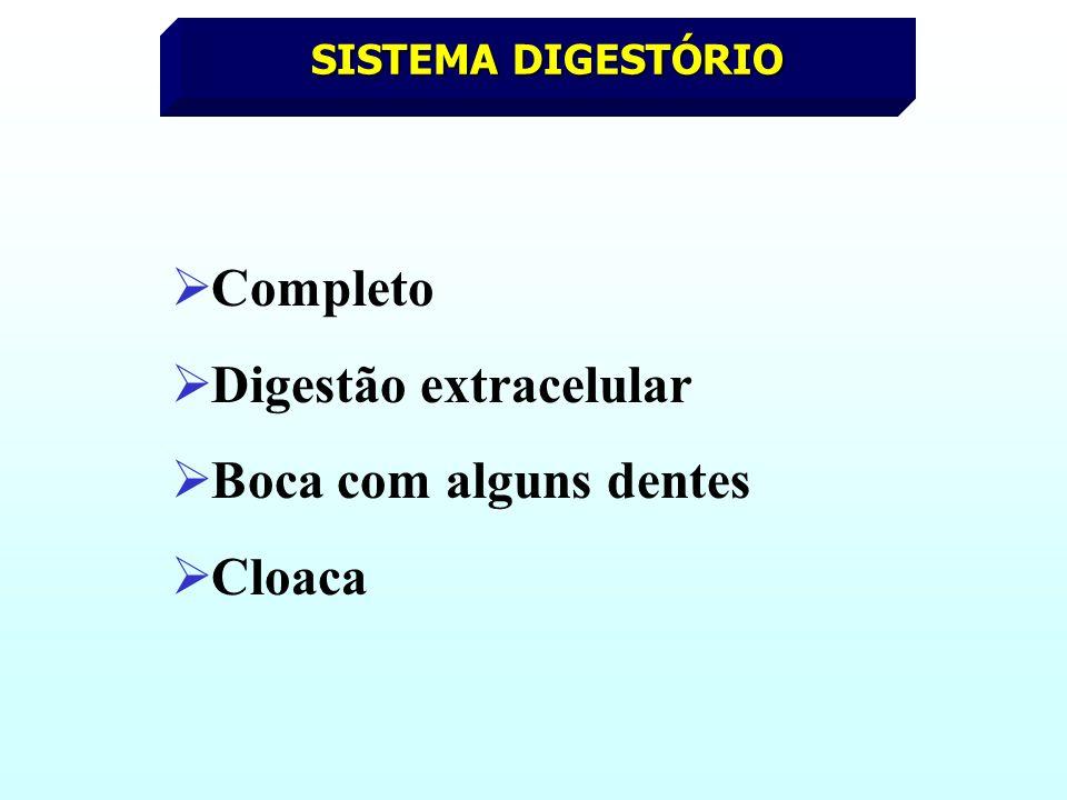 SISTEMA DIGESTÓRIO Completo Digestão extracelular Boca com alguns dentes Cloaca