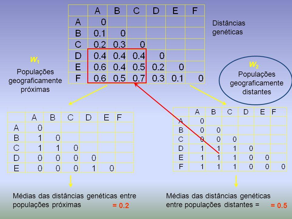 W1W1 W2W2 Médias das distâncias genéticas entre populações próximas Populações geograficamente distantes Populações geograficamente próximas Médias da