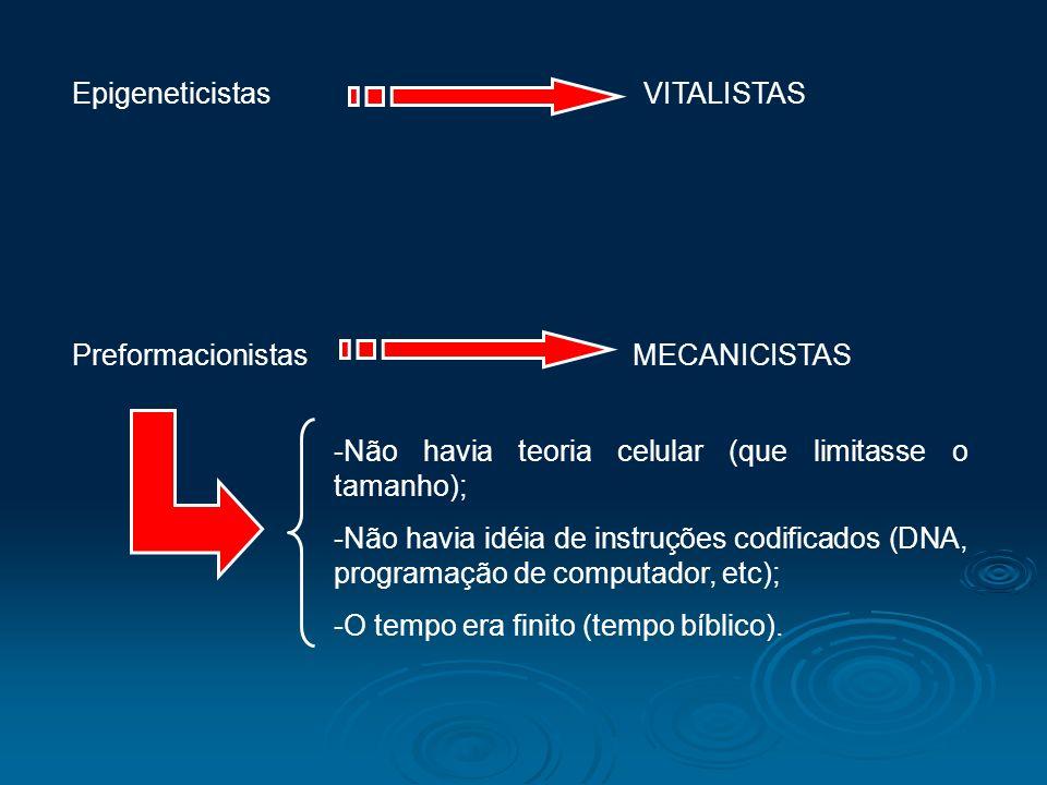 Epigeneticistas VITALISTAS Preformacionistas MECANICISTAS -Não havia teoria celular (que limitasse o tamanho); -Não havia idéia de instruções codifica