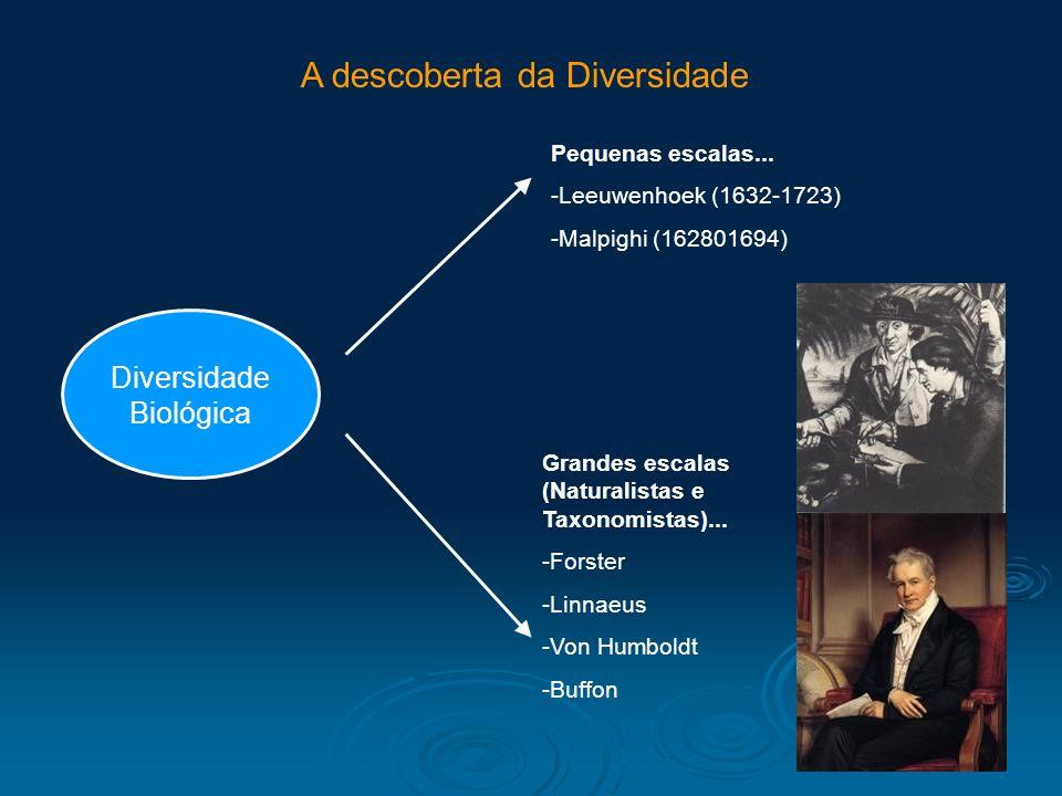 A descoberta da Diversidade Diversidade Biológica Pequenas escalas... -Leeuwenhoek (1632-1723) -Malpighi (162801694) Grandes escalas (Naturalistas e T