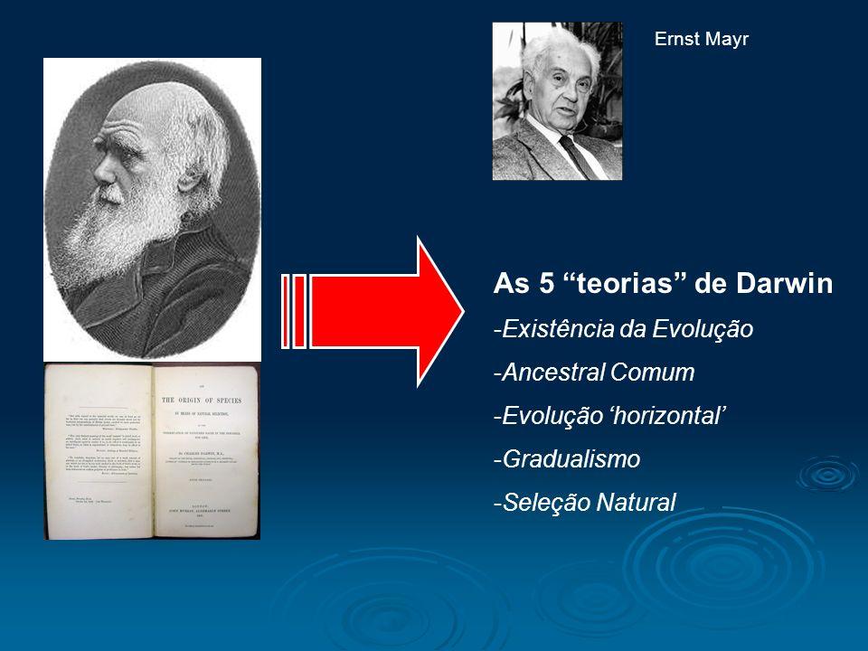 As 5 teorias de Darwin -Existência da Evolução -Ancestral Comum -Evolução horizontal -Gradualismo -Seleção Natural Ernst Mayr
