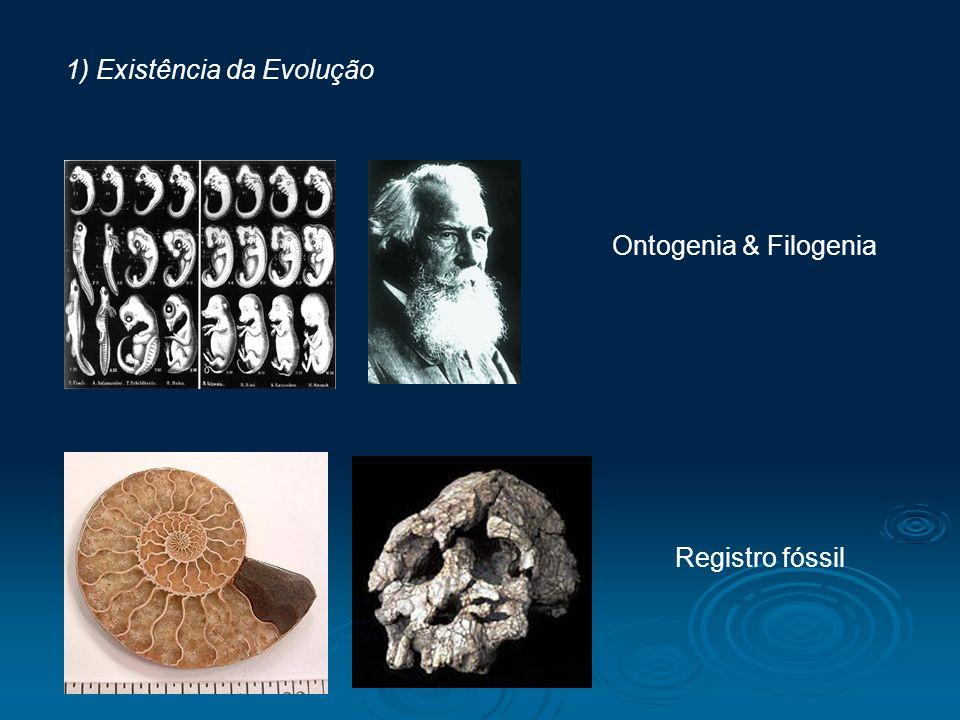 1) Existência da Evolução Ontogenia & Filogenia Registro fóssil