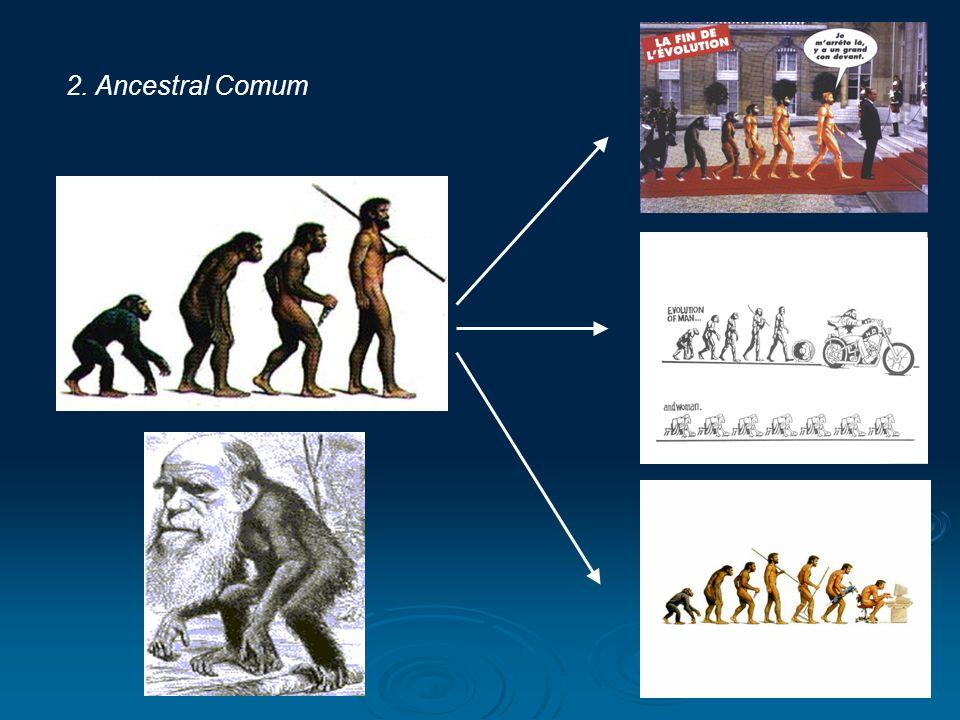 2. Ancestral Comum